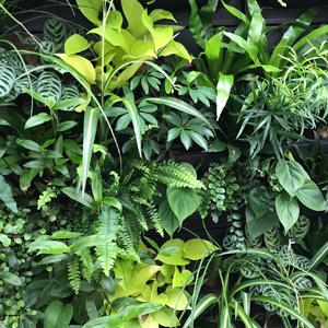 Groene-wanden-Orangerie-Bijleveld